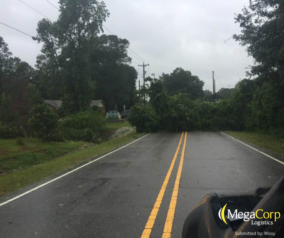 A tree that has fallen over and is blocking the road ahead.